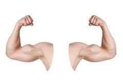 Brazos masculinos con los músculos doblados del bíceps Fotos de archivo libres de regalías