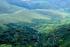 Brazylia las obrazy stock
