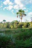 Brazylia roślinność obrazy stock