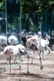 Brazylijscy ptaki Obrazy Royalty Free