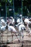 Brazylijscy ptaki Obraz Royalty Free