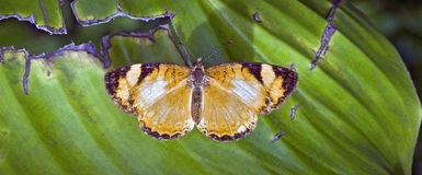 Brazylijski motyli namierzony w szczątku Atlantycki tropikalny las deszczowy Fotografia Stock