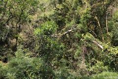 Brazylijski tropikalny las deszczowy Zdjęcia Royalty Free