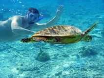 Brazylijskie bahia coroa żółwia morskiego vermelha wyspy Fotografia Royalty Free