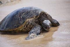 Brazylijskie bahia coroa żółwia morskiego vermelha wyspy Zdjęcia Stock
