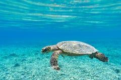 Brazylijskie bahia coroa żółwia morskiego vermelha wyspy Zdjęcie Stock