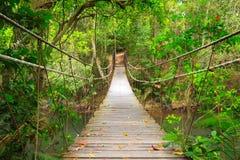 Brücke zum Dschungel, Khao Yai, Thailand Lizenzfreies Stockbild
