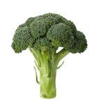 Bróculi aislado Foto de archivo libre de regalías