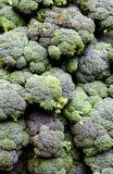 Bróculos calabrese Foto de Stock