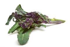 Bróculos Sprouting Imagem de Stock Royalty Free