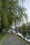 Brda river. Royalty Free Stock Photos