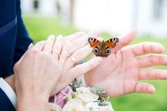 Brdie et mains de marié avec le papillon Photos stock