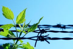 Breach of prison. Leaf and old barbed wire stock photos