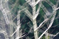 Breach trees abstract Stock Images
