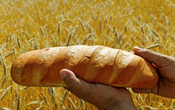 Bread above field. Stock Image