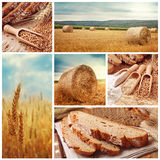 Bread And Harvesting Wheat Stock Photography