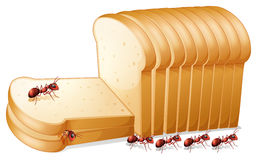 Bread and ants. Illustration of ants on bread royalty free illustration