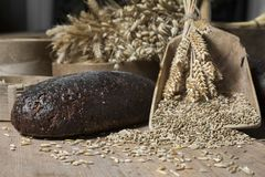 Brown whole grain loaves composition on rustic wood. Bread background. Brown whole grain loaves composition on rustic wood with wheat ears scattered around Royalty Free Stock Photos