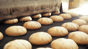 Bread bakery food factory production with fresh products. 4k stock video footage