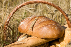 Bread basket in the cornfield Stock Photography