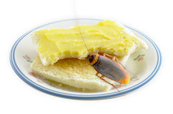 Bread with butter and cockroach Royalty Free Stock Image