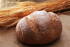 Bread and cereal plant Stock Image