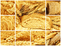Bread and cereals Stock Images