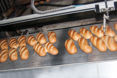Bread on conveyor Stock Images