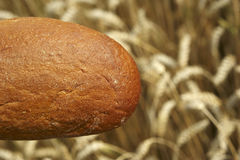 Bread before Cornfield Royalty Free Stock Images