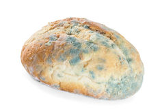 Bread covered in mold. Royalty Free Stock Photos
