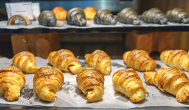 Bread and Croissant Arrange Royalty Free Stock Photo