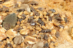 Bread crust with seeds Stock Photos