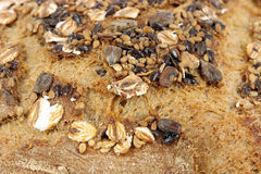 Bread crust with seeds close up Stock Images