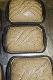 Bread Dough. A natural shot of a bread daough ready for backing Stock Image