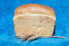 Bread and ears on blue background Royalty Free Stock Images