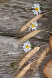 Bread ears and daisies Stock Images