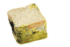 Bread expired on white background Royalty Free Stock Photo