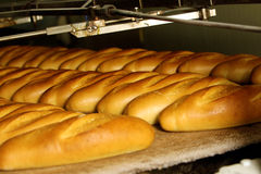 Bread factory, production line Stock Photo