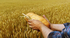 Bread and field. Stock Photo