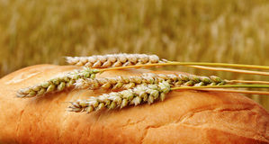 Bread and field. Stock Photography