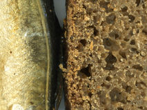 Bread and fish. Brown bread and smoked fish Stock Photo