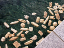 Bread for fish. Dry bread thrown into the water to feed the fish Stock Photo