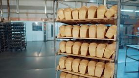 Bread fresh baked bun bread bakery food factory production with fresh products. Bread fresh baked bun bread bakery food factory production with fresh products stock footage
