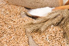 Bread, grain and wood spoon on sacking Stock Image