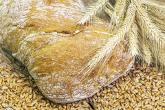 Bread with grains and ears Royalty Free Stock Photo