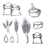 Bread hand drawn set with wheats. Vector illustration. vector illustration