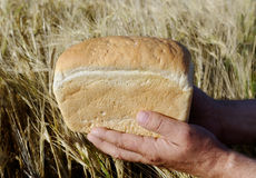 Bread in the hands. Stock Images