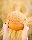 Bread in hands Stock Photo