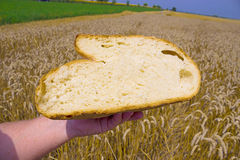 Bread. Homemade bread in wheat field, photography Royalty Free Stock Photo