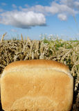 Bread and land. Royalty Free Stock Photography